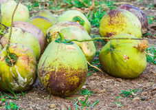 Group of Coconut Royalty Free Stock Photos