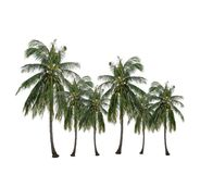 Group of coconut palm tree growing up in the garden isolated on white. stock photography