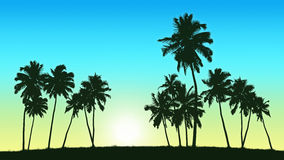 Group of coconut trees on sunrise background. Realistic silhouette of group of coconut trees on sunrise background, panoramic view Royalty Free Stock Images