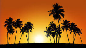 Group of coconut trees on sunset background Stock Photography