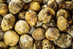 Group of Coconuts,  coconuts for decoration. Group of Coconuts,  old grunge dirty yellow coconuts for decoration Royalty Free Stock Photography