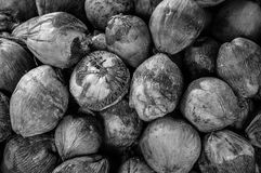 Group of Coconuts,  coconuts for decoration. Group of Coconuts,  old grunge dirty black and white coconuts for decoration Royalty Free Stock Image