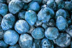 Group of Coconuts,  coconuts for decoration. Group of Coconuts,  old grunge dirty blue coconuts for decoration Stock Photos