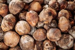 Group of Coconuts,  coconuts for decoration. Group of Coconuts,  old grunge dirty brawn coconuts for decoration Royalty Free Stock Photos