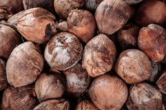 Group of Coconuts,  coconuts for decoration. Group of Coconuts,  old grunge dirty brawn coconuts for decoration Royalty Free Stock Image