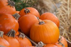 Group collection bunch Pumpkins Royalty Free Stock Photo