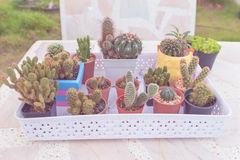 Group of collection cactus in pot on marble table background. pastel color or vintage style. Stock Photo