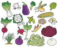 Group of color vegetables Royalty Free Stock Photos