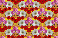 Group colored flowers large daisies on yellow background Stock Image