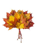 Group of colorful autumn leaves Royalty Free Stock Photo