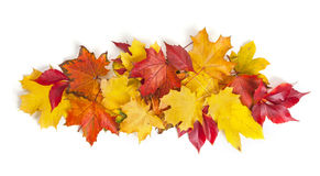 Group of colorful autumn leaves Stock Image