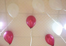 Group of colorful balloons on white ceiling. Stock Photos