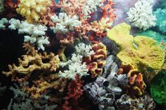 Group of colorful corals Royalty Free Stock Images