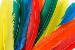 Group of colorful feathers Stock Photos