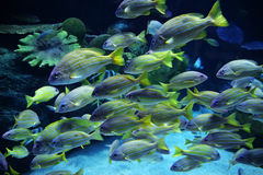 Group colorful fish Royalty Free Stock Photography