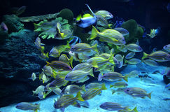 Group colorful fish Stock Images