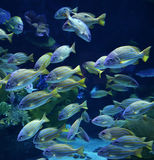 Group colorful fish Stock Photo