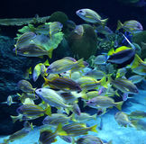 Group colorful fish Royalty Free Stock Photos