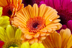 A group of colorful gerberas Stock Photo