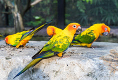 Group of colorful mini parrot on a rock. Stock Photo