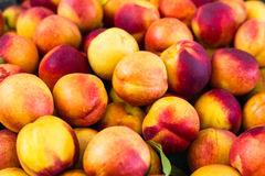 Group of colorful nectarine fruits from the market Stock Photography