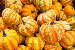 Group of colorful pumpkins Royalty Free Stock Photo