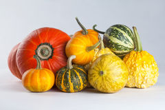 Group colorful pumpkins. different kinds, forms and colors Royalty Free Stock Image
