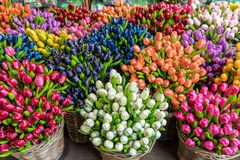 Group of colorful wooden tulips royalty free stock photo