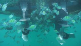 Group of coral fish in Andaman Sea stock footage