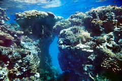 Group of coral fish  water. Royalty Free Stock Photography