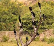 A group of cormorant and purple moorhen in nature stock images