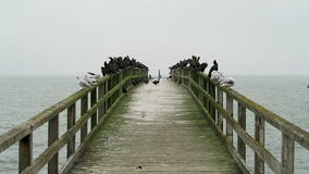 Group of cormorant resting on promenade bridge at baltic sea town Sassnitz. Rugen Island, Germany stock video footage