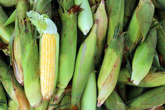 group corn  husks Royalty Free Stock Photo