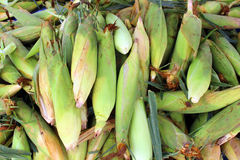 Group corn  husks Royalty Free Stock Images