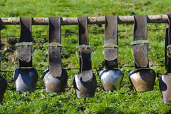 Group of cow bells Royalty Free Stock Photo