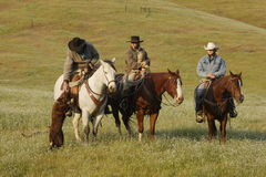 Group of Cowboys with Dog. Three cowboys on horseback with herding dog in grassy meadow