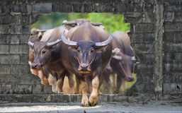 Group of cows and buffalos Stock Photo