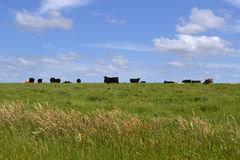 Group of cows Royalty Free Stock Photography