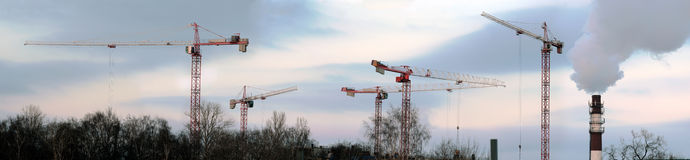 Group of cranes Stock Image