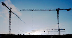Group of cranes at thesunset Stock Image