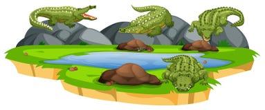 Group of crocodile in pond. Illustration stock illustration