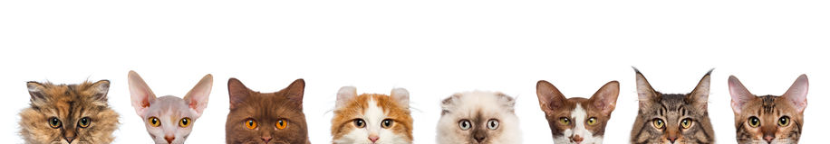 Group of cropped view of Cat heads Stock Images