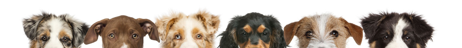 Group of cropped view of Dog heads Royalty Free Stock Images