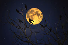 Group of crows sitting on a branch against a full moon Stock Image
