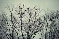 Group of crows sitting on a tree Stock Images