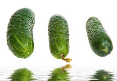 Group of cucumbers Stock Image