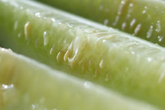 Group of cucumbers close up. Group of cucumbers sliced along the close-up Royalty Free Stock Photography