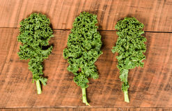 Group of curly kale leaves Stock Image