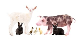 Group of cute farm animals stock image