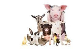 Group of cute farm animals. Together, isolated on white background Royalty Free Stock Photos